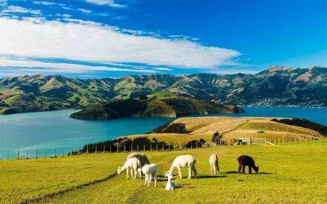 国际物流新西兰运输寄送费用,DHL_EMS货运代理