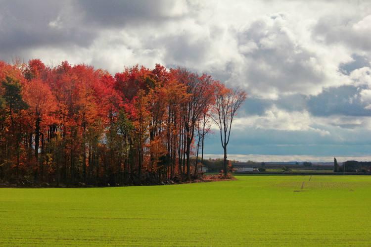 加拿大风光牛气集运国际物流集运转运