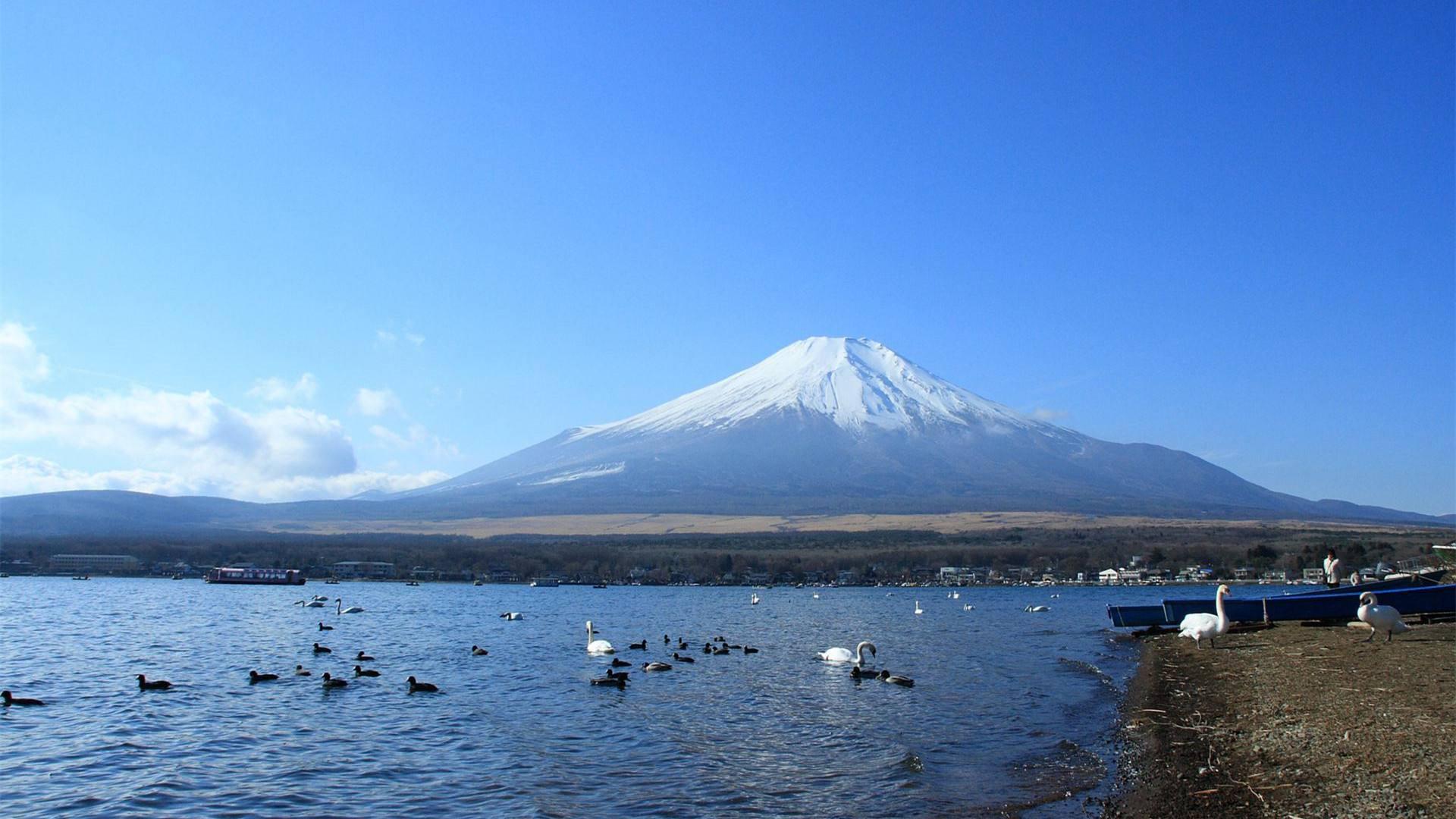 国际物流到日本多少钱